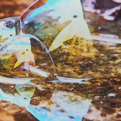 16JUNIO2014 Viaje a través de la lente de una burbuja. Foto: Montse Carreño.